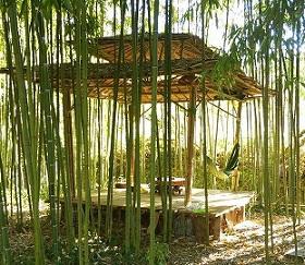 bamboe Nieuwsbrieven van Leven in Aandacht