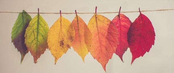 herfstbladeren2-759x500 Nieuwsbrieven van Leven in Aandacht