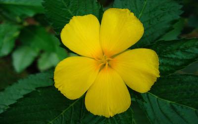 Yellow-tropical-flower-with-five-petals Nieuwsbrieven van Leven in Aandacht
