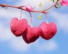 hartsverbinding Nieuwsbrieven van Leven in Aandacht