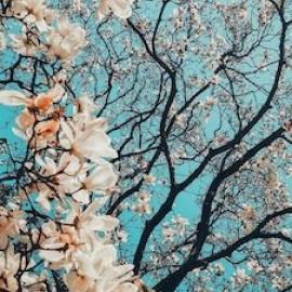 Zes aandachtige ontmoetingen met de lente