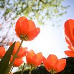 Zaterdag 8 april: Wat gebeurt er na onze dood? Themadag met lezing door Hilly Bol