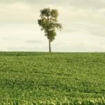 Blog - Ode aan de stilte in een wereld die maar doorraast
